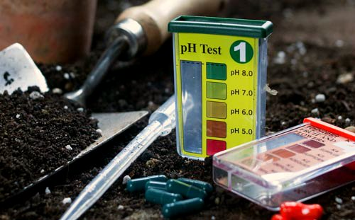 Journeys in Soil Testing: Do DIY Kits Match Pro Results?