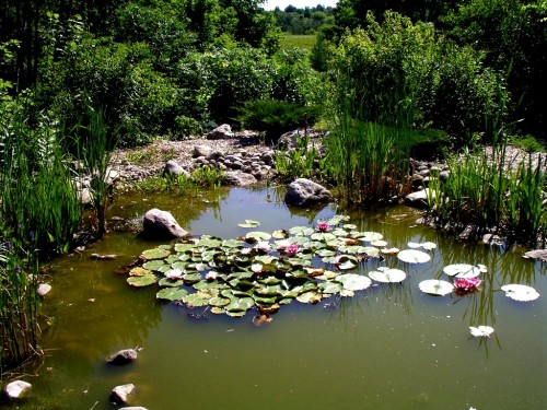 Pond pumps are not required in man made ponds for Water filtering plants for ponds