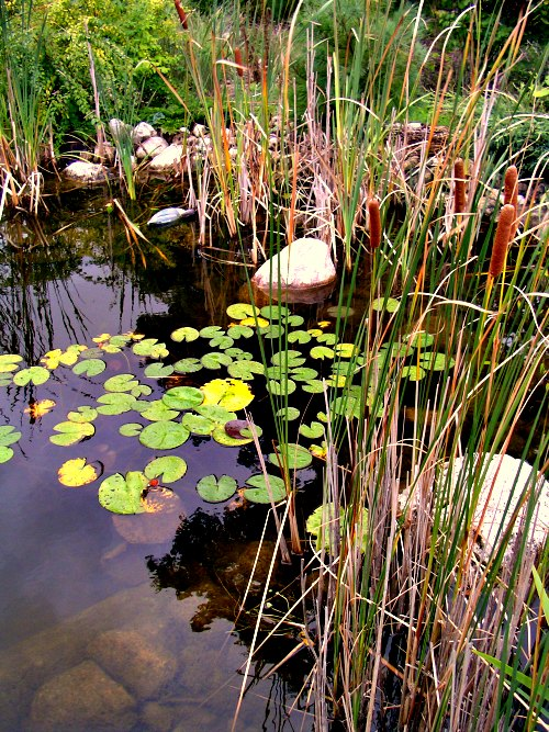 Image gallery natural pond filter for Water filtering plants for ponds