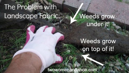 Landscape Fabric Weed Barrier Cloth does not work