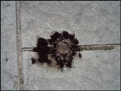 How to get rid of ants with coffee grounds