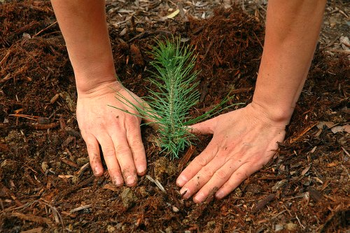 Best time to plant trees