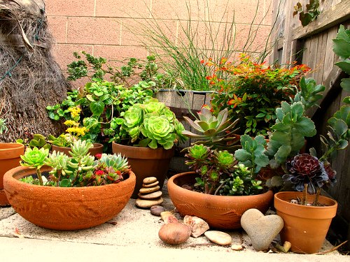 Fertilizing potted plants