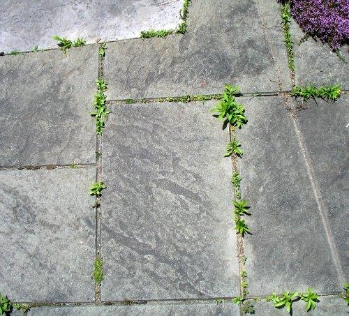 6 herbicidas caseros: Matar las malas hierbas sin matar a la Tierra: TreeHugger