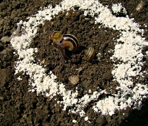How To Get Rid Of Slugs With Diatomaceous Earth