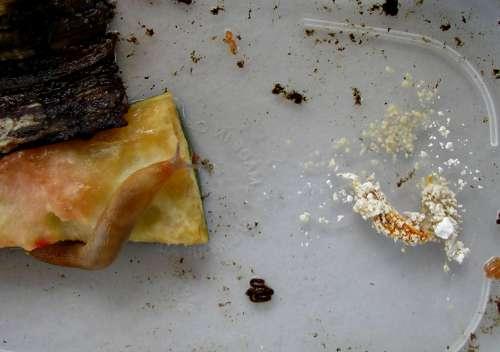 Slugs and diatomaceous earth survival