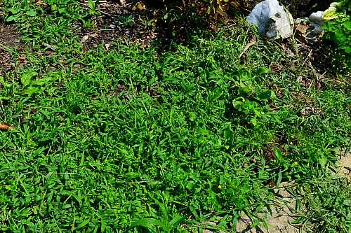Homemade Weed Killer Vinegar 8