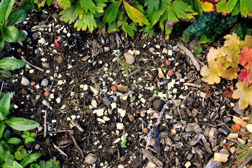 Eggshells - Do They Decompose In The Garden 7
