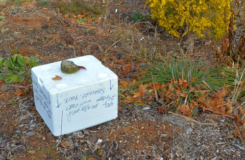 Styrofoam cones - do they keep plants warm, by Robert Pavlis