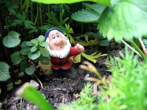 A true organic gardener, organic gardening