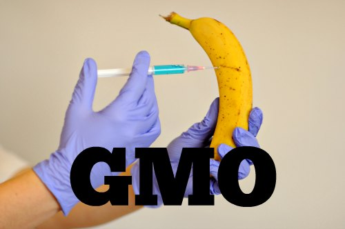 GMO Myths - Understand the Truth About GMO Plants