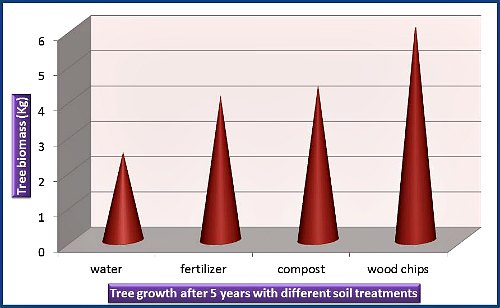 Effect of fertilizer and mulch on tree growth, by Garden Myths (based on reference 1)