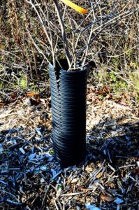 Plastic drain pipe tree guard, split down the side, by Robert Pavlis