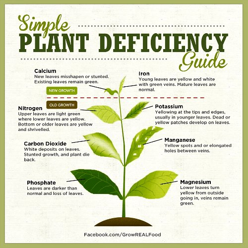 Plant Nutrient Deficiency Symptoms by Permablitz