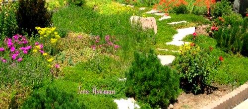 Tova's garden