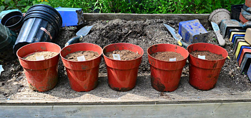 Does peat moss acidify soil? Various mixtures of soil and peat moss were tested over time to monitor the pH, by Robert Pavlis