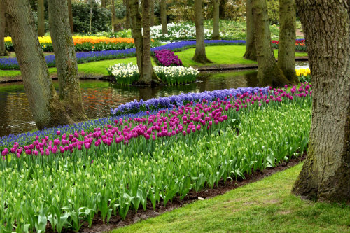 When is the best time to plant spring bulbs?