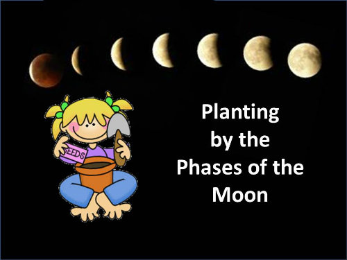 Planting by the moon phases